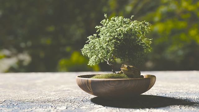 Tutto il mondo del bonsai schefflera